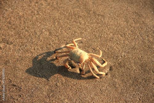 Cute crab walking on the beach.
