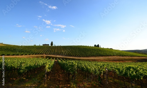 Fotobehang Wijngaard Beautiful vineyard and blue sky in Chianti, Tuscany. Italy