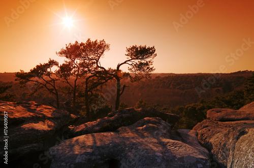 Poster Bruin Rochers du golfe de Larchant dans le massif forestier de Fontainebleau