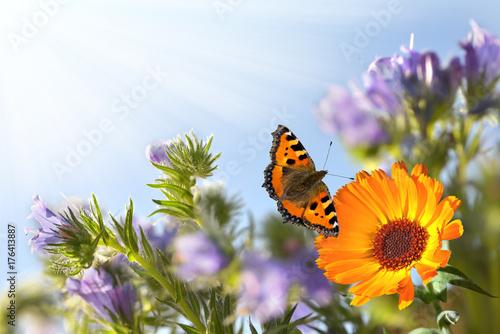 Fotografie, Obraz  Sommer im Garten