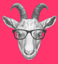 Portrait Of Goat With Glasses....