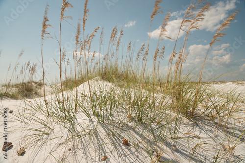Weisser Traumstrand mit Dünen und Muscheln in Florida