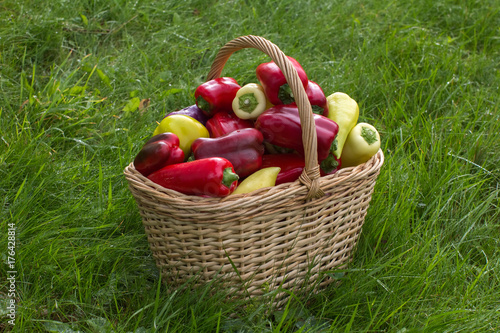basket with peppers is placed on green grass плакат