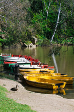 Row Of Small Boats For Hire