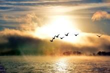 Ducks Flying In Fog