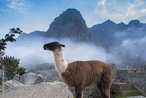 Staande foto Lama Llama in Machu Picchu, Peru.