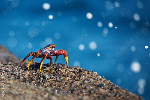 ocean crab