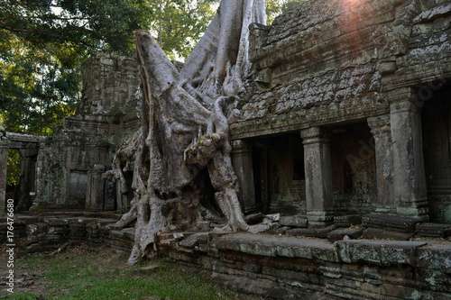 Foto op Aluminium Bedehuis The temple and trees in Angkor Wat, Cambodia