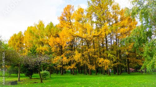 Foto op Aluminium Pistache Autumn season in Russia Moscow