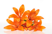 Lily Flower.  Bouquet Of Orange Lilies On A White Background. Bouquet Of Orange Flowers. Aroma Of Lilies