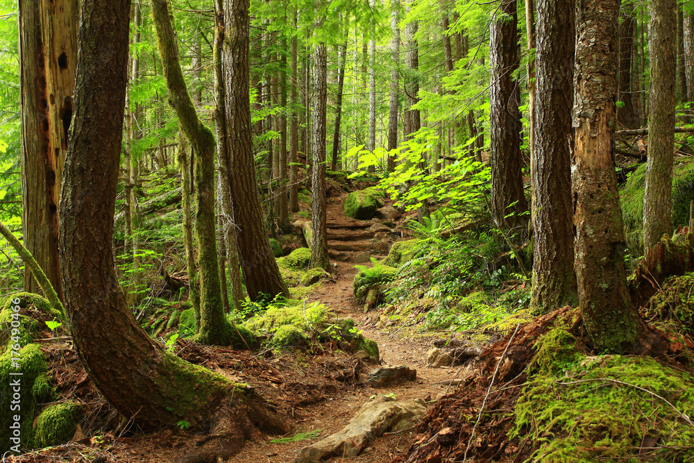 Fototapeta a picture of an Pacific Northwest forest trail