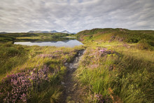 Beacon Tarn Pond Illuminated By Warm Golden Sunlight With Blooming Heather And Lake District Mountains In The Background