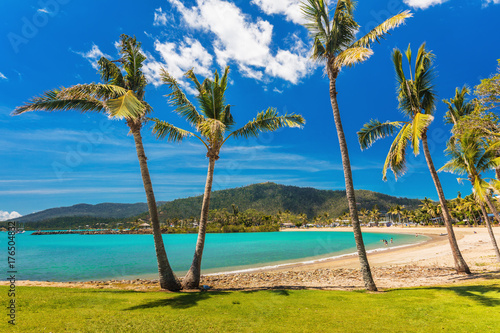 Sandy beach with palm trees, Airlie Beach, Whitsundays, Queensland Australia Canvas Print