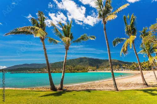 Photo Sandy beach with palm trees, Airlie Beach, Whitsundays, Queensland Australia
