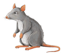 Cartoon Animal - Rat - Some Ac...