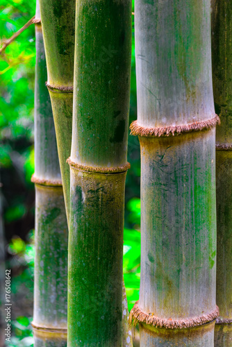 bamboo-tree-in-indonesian-jung