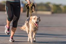 Sportswoman Jogging With Dog