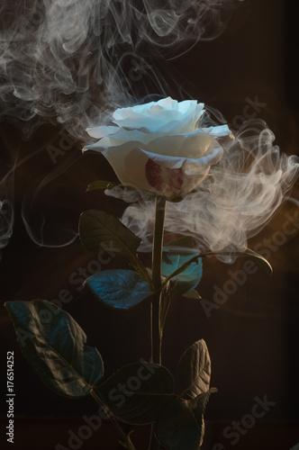 Fototapeta Róża w dymie