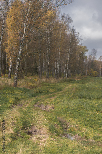 Road in the field along the forest, autumn landscape