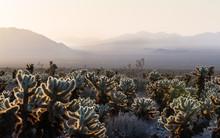 Wild Desert Landscape With Cho...