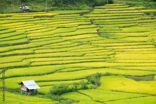 Poster Rijstvelden Green Terraced Rice Field in Nan, Thailand.
