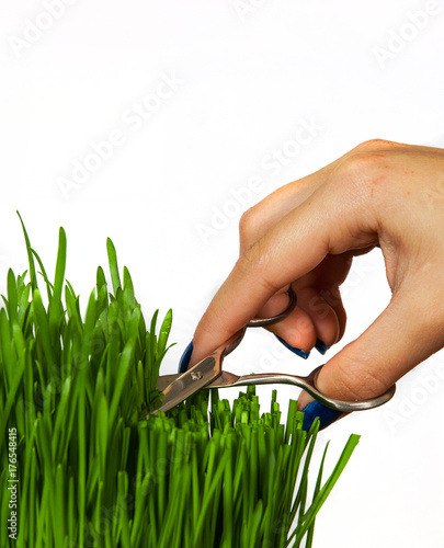 Fotografie, Tablou a hand with scissors cutting grass isolated on white background