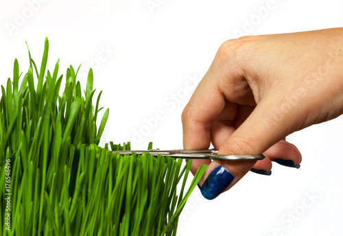 a hand with scissors cutting grass isolated on white background Fototapet