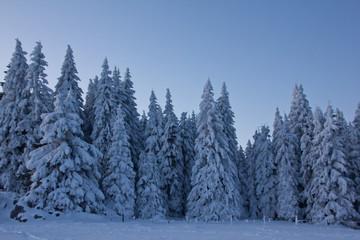 Blaue Stunde im Winter