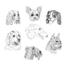 Dog Breed Portraits Hand Drawn Sketches.  Dog Heads Collection Isolated On White Background.