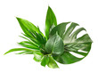 canvas print picture - various tropical leaves