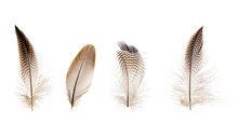 Set Of Beautiful Fragile Little Bird Feathers Isolated On White Background