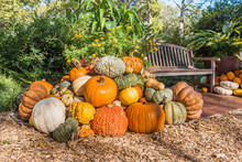 Mound Of Pumpkins And Gourds I...