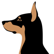 Dog Doberman  Head   Vector Il...
