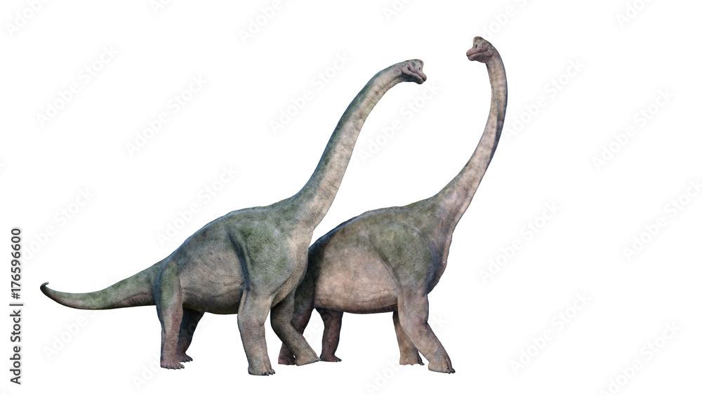 Brachiosaurus altithorax couple