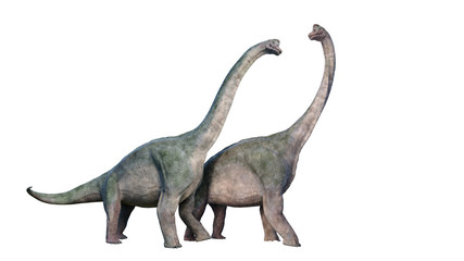 Brachiosaurus altithorax couple