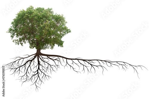 Fotografia, Obraz  banyan tree