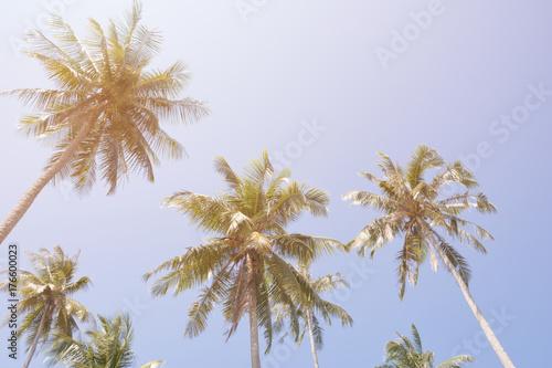 Fotobehang Aan het plafond Coconut trees at dramatic vivid sun sky in summer holiday vacation. Classic vintage film look tone.