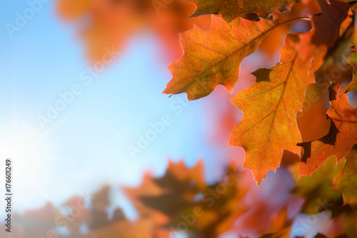 Aluminium Prints Autumn Beautiful Autumn Background