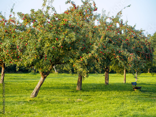 Photo Streuobstwiese