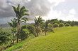 Landscape in Barbados