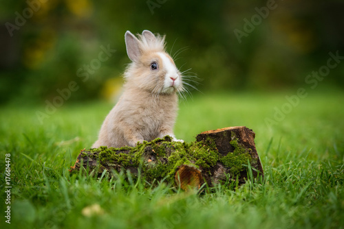Little rabbit in summer