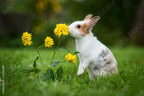 Little rabbit smelling a flower in the garden