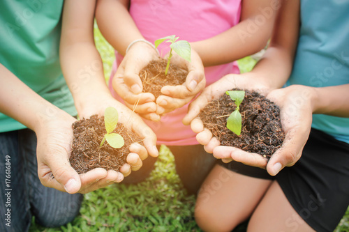 Fotografie, Obraz  Children hands holding sapling in soil surface with plant, spring or summer time, Multicultural hands of children and adult with plant, Green environment and earth day concept
