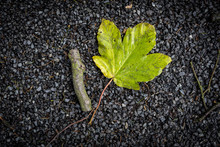 A Green Leaf And A Short Stick Lying On The Road Between The Fields