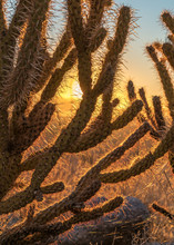 Sunrise With Cactus In Anza Bo...