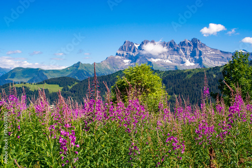 Obraz na plátně  Chablais Alps with Dents Blanches mountain in the background,  Switzerland