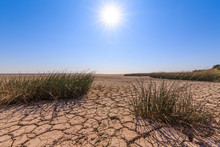 Cracked Land, Scanty Vegetation, Blue Sky And Bright Sun As A Symbol Of Drought