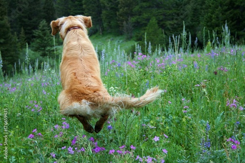 Photo  Jumping for Spring