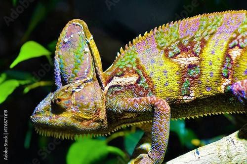 Cadres-photo bureau Cameleon Chameleon
