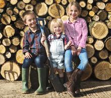 Firewood Fuelwood Lumber Timbe...